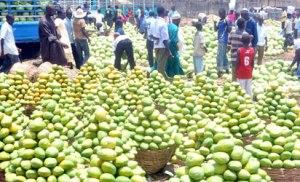 mango-market